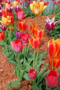 Tavaszi kert tervezése