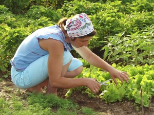 Leegyszerűsített kerti munka
