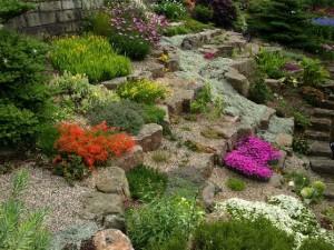 Sziklakert kialakításához ajánlott növények