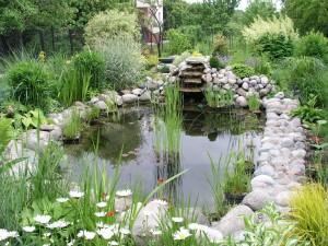 Kerti tavak növényei és állatai